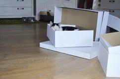 Härlig katt som sover i en ask Royaltyfri Bild