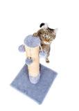 Härlig katt som vässar dess jordluckrare Royaltyfria Bilder