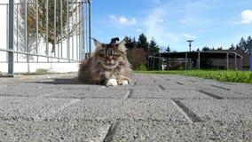Härlig katt utomhus i solen, sommer Royaltyfria Foton