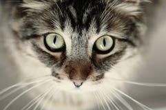 härlig kattcloseupstående royaltyfria bilder