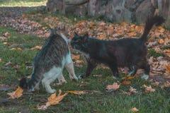 Härlig kattförälskelse på hösten arkivfoton