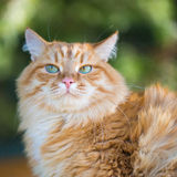 härlig kattred Arkivfoton