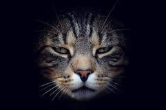 Härlig kattstående Royaltyfria Bilder