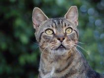 härlig katttabby royaltyfri bild