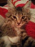 härlig kattunge Arkivbild