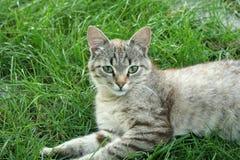 härlig kattunge Arkivfoto