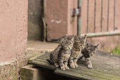 Härlig kattunge tre Royaltyfri Fotografi