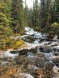 Härlig klar flod som flödar till och med skogarna av Canadiaen fotografering för bildbyråer