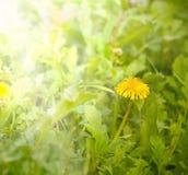 Härlig konst fjädrar blommabakgrund Arkivfoton