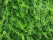 Härlig konstgjord väggbakgrund och textur för grön växt Fotografering för Bildbyråer