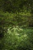 Härlig konstnärlig landskapbild av frodig gräsplan l för vårskog Arkivfoto