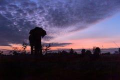 Härlig kontur av elefanten mot en fantastisk solnedgång Arkivbilder