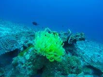 Härlig korall av den undervattens- världen på Similan Marine National p Royaltyfria Foton