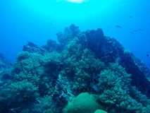 Härlig korall av den undervattens- världen på Similan Marine National p Arkivfoton