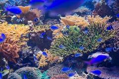 Härlig korall i undervattens- med den färgrika fisken Fotografering för Bildbyråer