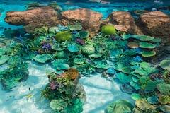 Härlig korall i undervattens- med den färgrika fisken Arkivfoton