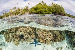Härlig korall och sjöstjärnan blir grund in av Solomon Islands royaltyfri foto