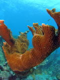 härlig korallrev Royaltyfria Foton
