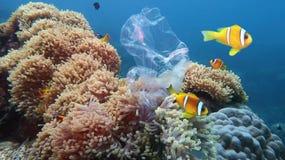 Härlig korallrev med havsanemoner och clownfish som förorenas med plastpåsen arkivbilder