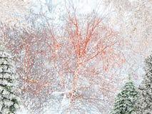 härlig kortjul Vinterkort Snöfall, julgranar och fåglar fotografering för bildbyråer