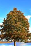 Härlig krona av ett träd som tas i höst arkivbild