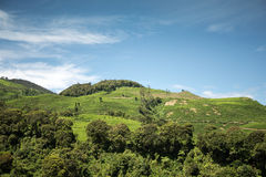 Härlig kulle med blå himmel Fotografering för Bildbyråer