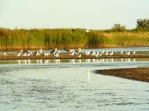 Härlig kust av det Azov havet Arkivfoton