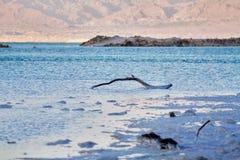 Härlig kust av det döda havet Royaltyfria Bilder