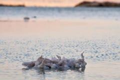 Härlig kust av det döda havet Royaltyfri Bild