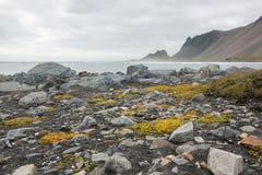 Härlig kust Stokksnes med sikt till Atlanticet Ocean och bergen, östliga Island Royaltyfria Bilder