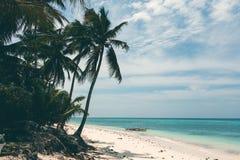 Härlig kustlinje, turkossikt av havet med palmträd, Arkivfoton