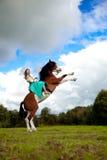 Härlig kvinna med en häst i fältet Flicka på Royaltyfri Foto