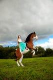 Härlig kvinna med en häst i fältet Flicka på Royaltyfria Foton
