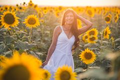 Härlig kvinna med långt hår i ett fält av solrosor i set Royaltyfria Bilder