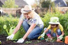 Härlig kvinna och chiddotter som planterar plantor i säng i hemhjälpträdgård på sommardagen Arbeta i trädgården aktivitet med royaltyfri fotografi