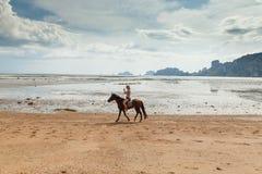 Härlig kvinna på en häst Hästryggryttare tropiskt strandparadis royaltyfri foto