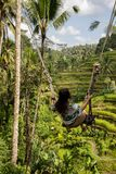 Härlig kvinna på hög gunga ovanför risfält i Bali arkivbild