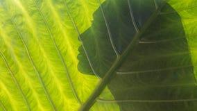 Härlig kvinnakontur på en tropisk bladbakgrund hälsa royaltyfri bild