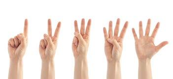 Härlig kvinnlig handräkning från en till gest fem bakgrund isolerad white Arkivfoto