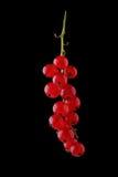 Härlig kvist för närbild av den röda vinbäret på en svart bakgrund Mogna saftiga frukter och bär på en svart bakgrund Royaltyfri Bild