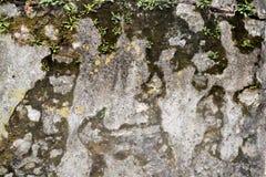 Härlig lättnad och textur av stenen med modeller och mossa Naturlig bakgrund för sten royaltyfri fotografi