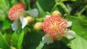 Härlig lös blomma i en buske Arkivfoton