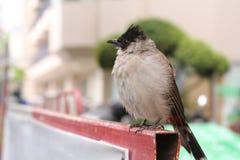 Härlig lös fågel Royaltyfria Foton