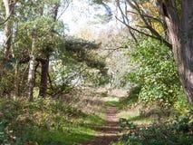 Härlig landsbana med ljus - gräsplan lämnar höstträd Arkivfoton