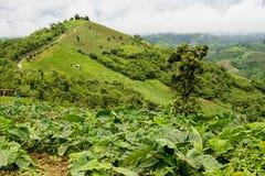 Härlig landskap- och bergdallantgård Arkivfoto