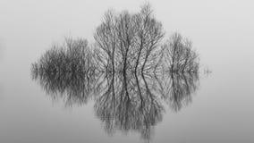 Härlig landskapbild av ett träd i en översvämmad sjö arkivfoto