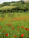 härlig landskapfjäder tuscan Royaltyfri Bild