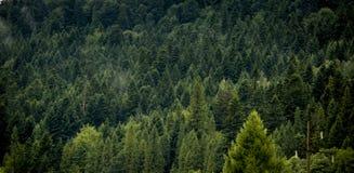 Härlig landskapnatur av regnskog- och bergbackgroun arkivbild