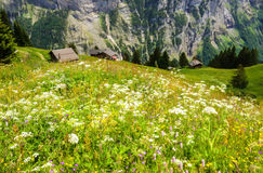 Härlig landskapsikt av att charma den Murren bergbyn med Lauterbrunnen dal- och schweizarefjällängar, Jungfrau region arkivfoton