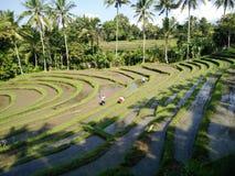 Härlig landskapsikt bali indonesia Fotografering för Bildbyråer